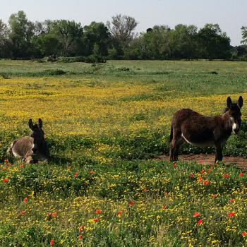 Alpilles - Esel - Reiseleiter Provence